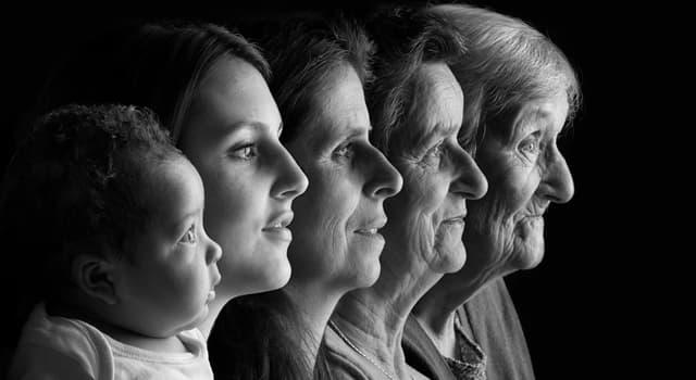 Сiencia Pregunta Trivia: ¿Cómo se llama el proceso por el cual se transmiten los rasgos de los padres a su descendencia?