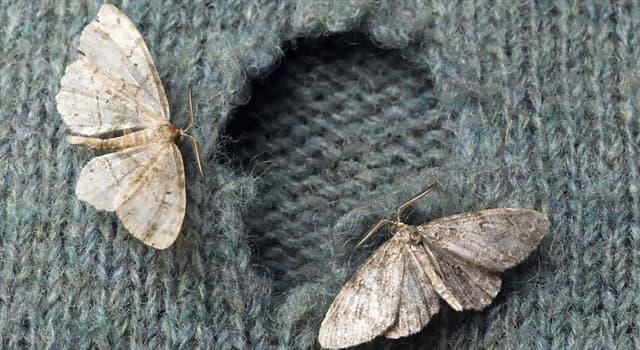 Naturaleza Pregunta Trivia: ¿Qué insectos son considerados en muchas ocasiones como plagas?