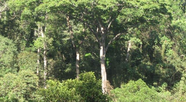 Naturaleza Pregunta Trivia: ¿Cuál de las siguientes es una madera dura de color negro?