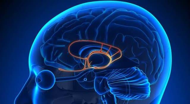 Сiencia Pregunta Trivia: ¿Qué área del cerebro se activa cuando sentimos miedo?