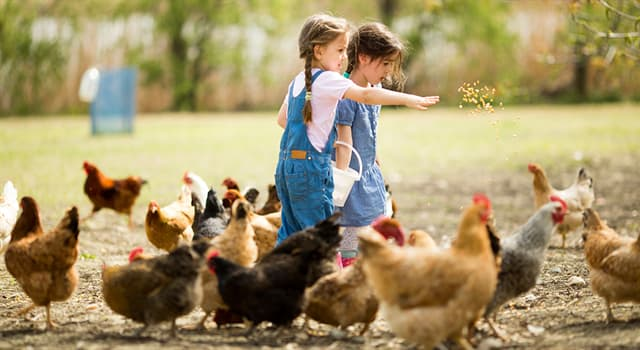 Naturaleza Pregunta Trivia: ¿Qué característica más importante tiene la gallina indonesia de la raza Ayam Cemani?