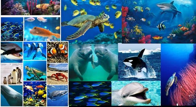 Naturaleza Pregunta Trivia: ¿Qué clase de animal son los ofiuras?