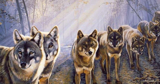 Cultura Pregunta Trivia: ¿Qué personaje de ficción fue criado por una manada de lobos?