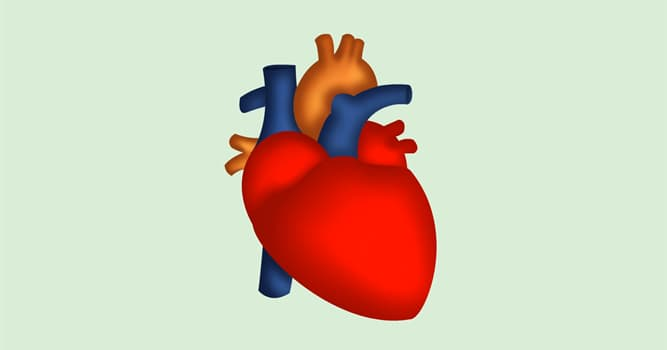Science Trivia Question: The human heart wall is composed of how many layers?