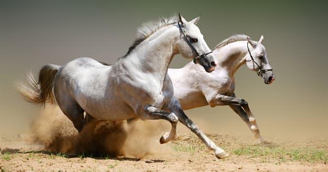 """Historia Pregunta Trivia: ¿A quién se le adjudica el proverbio """"no cambies de caballo a mitad del río""""?"""