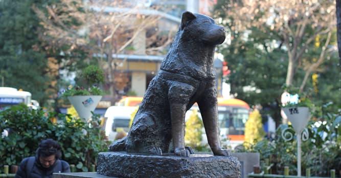 Cultura Pregunta Trivia: ¿En qué ciudad japonesa está la estatua más famosa de Hachikō?
