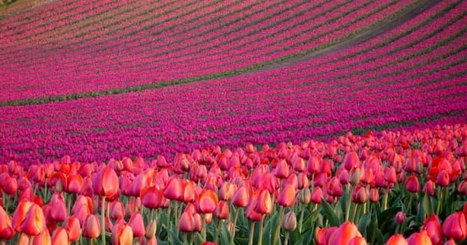 Natur Wissensfrage: Welche Blume gilt als die größte Blume im Pflanzenreich?