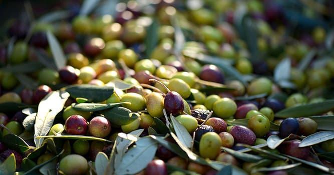 Geographie Wissensfrage: Welche Region produziert ungefähr 95% der Oliven der Welt?
