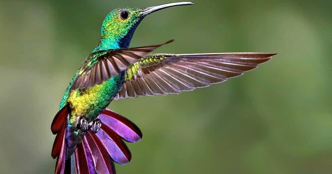 Natur Wissensfrage: Welcher Vogel ist der kleinste Vogel der Welt?