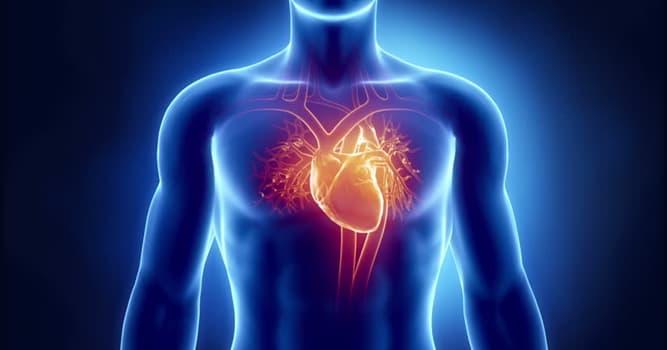 Natur Wissensfrage: Welches Tier hat mehrere Herzen?