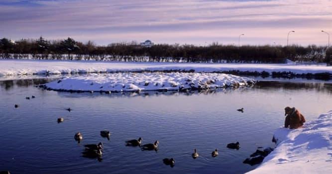 Geografía Pregunta Trivia: ¿Qué ciudad le proporciona a sus aves salvajes un estanque climatizado?