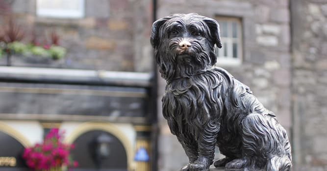 History Trivia Question: Which dog spent 14 years guarding the grave of his owner?