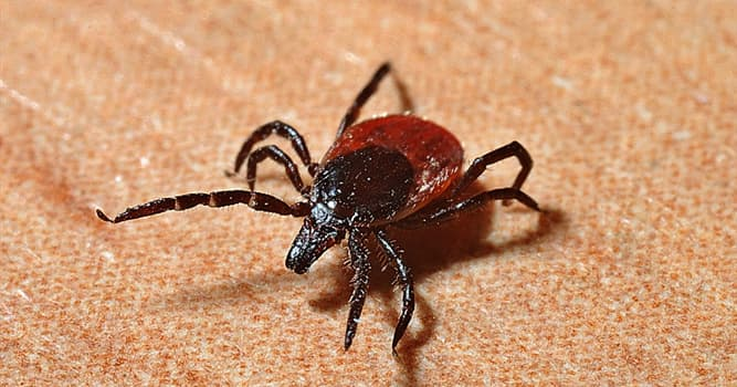 Culture Trivia Question: Which singer had been diagnosed with Lyme disease?