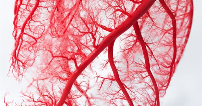 Science Trivia Question: Which type of animal tissue has no blood vessels?