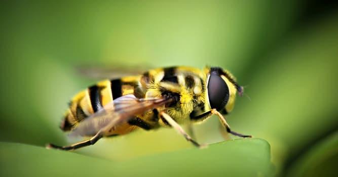 Natur Wissensfrage: Wie heißen männliche Honigbienen?
