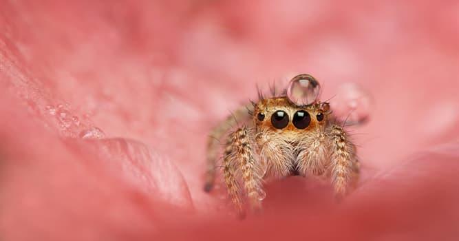 Natur Wissensfrage: Wie viele Beine hat eine Spinne?