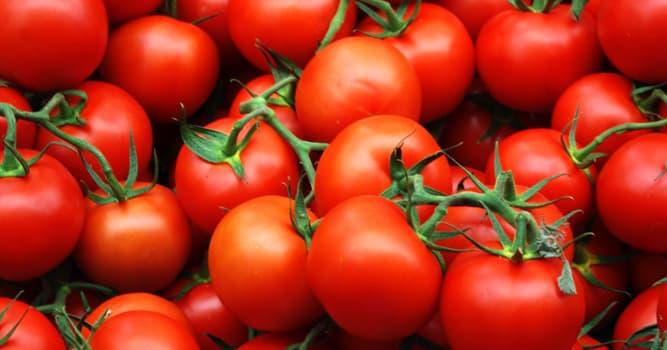 Geschichte Wissensfrage: Wurden irgendwann Tomaten als giftig eingestuft?