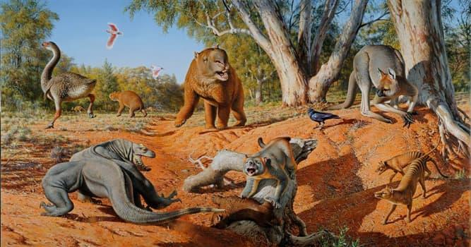 Natur Wissensfrage: Zu welcher Klasse der Tiere gehört der jetzt ausgestorbene Dodo?