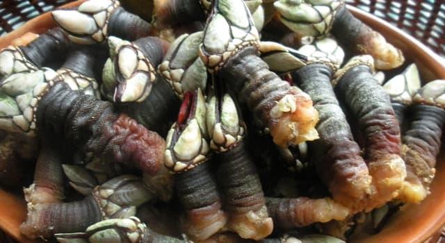 """Naturaleza Pregunta Trivia: ¿A qué clase de crustáceo pertenece """"El percebe""""?"""
