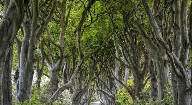 Naturaleza Pregunta Trivia: ¿A qué género de árboles ataca principalmente la plaga denominada grafiosis?