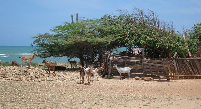 Geografía Pregunta Trivia: ¿A qué país pertenece la Península de Paraguaná?