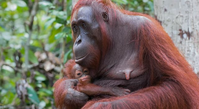 """Historia Pregunta Trivia: ¿A qué se denomina """"Estro"""" en los mamíferos?"""