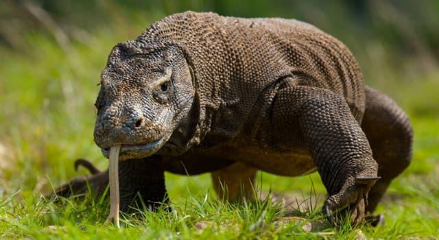 Naturaleza Pregunta Trivia: ¿Qué animal está en la imagen?
