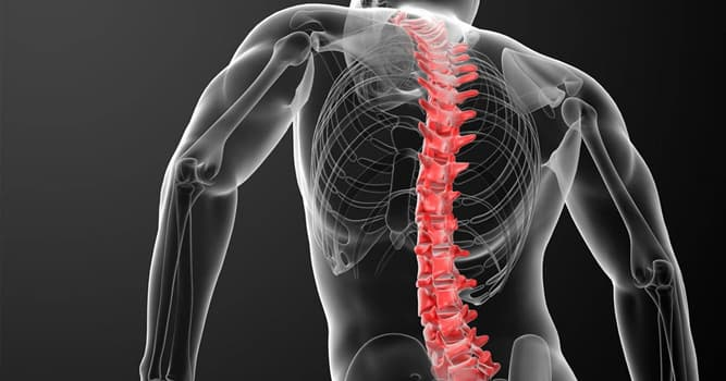 Сiencia Pregunta Trivia: ¿Cómo se llama la condición de una persona cuya espina dorsal está combada en tres partes?