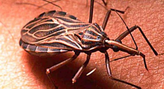 Naturaleza Pregunta Trivia: ¿Cómo se llama la enfermedad que trasmite la vinchuca?