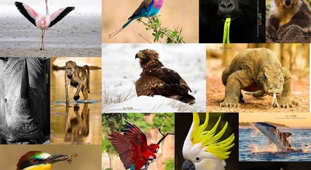 Сiencia Pregunta Trivia: ¿Cuál de los animales mencionados es endotermo?