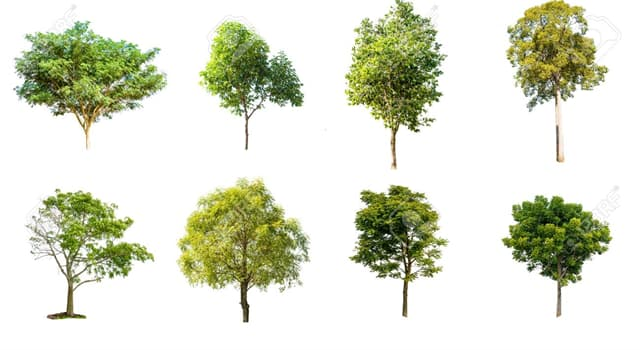 Naturaleza Pregunta Trivia: ¿Cuál de los siguientes árboles es de origen tropical?
