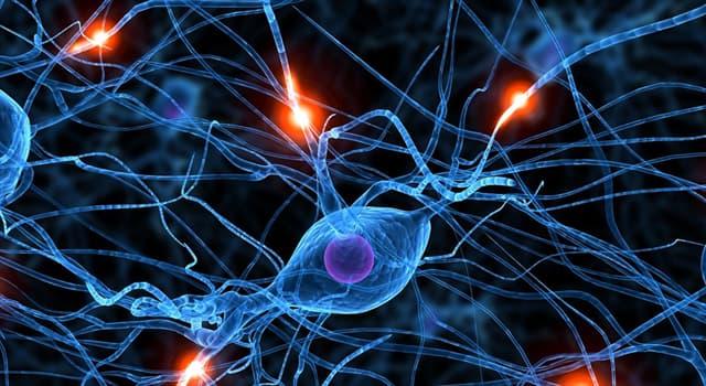 Сiencia Pregunta Trivia: ¿Cuántas clases de sinapsis hay?