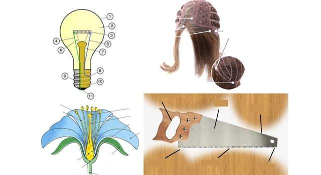 Сiencia Pregunta Trivia: ¿De qué forman parte el bulbo, el casquillo y el filamento?