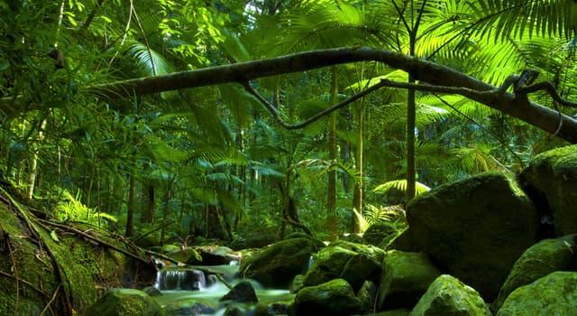Naturaleza Pregunta Trivia: ¿Dónde está el bosque Daintree?
