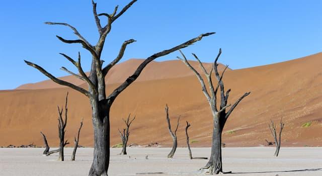 Geografía Pregunta Trivia: ¿Dónde se encuentra el Bosque de Dead Vlei?