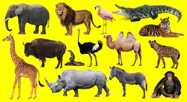 Geografía Pregunta Trivia: ¿Dónde se encuentra el bosque de Gir, santuario de protección de especies salvajes?