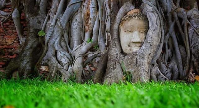 """Cultura Pregunta Trivia: ¿En qué antigua ciudad se localiza el """"Buda de las raíces""""?"""
