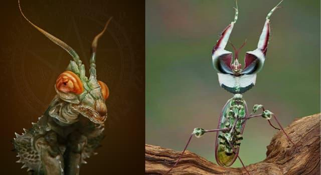 """Naturaleza Pregunta Trivia: ¿En qué continente habita la """"Mantis diabólica"""" única especie dentro del género idiolomantis?"""