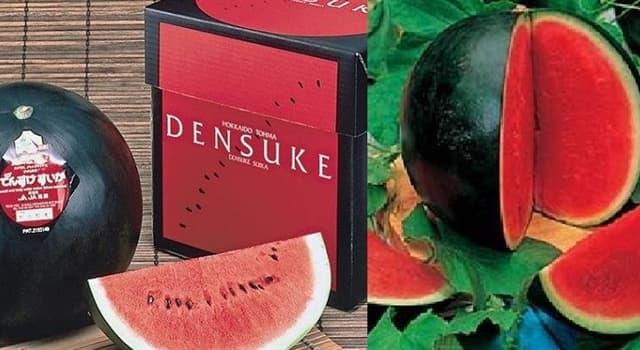 """Naturaleza Pregunta Trivia: ¿En qué isla de Japón se cultiva la sandía """"Densuke""""?"""