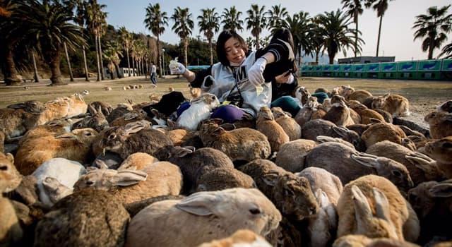 """Geografía Pregunta Trivia: ¿En qué país se encuentra la """"Isla de los conejos""""?"""