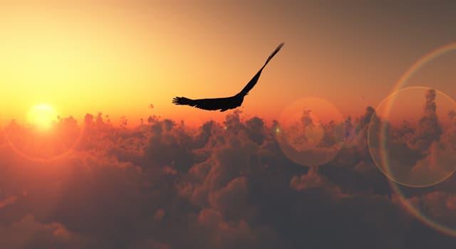 """Deporte Pregunta Trivia: ¿Qué actividad deportiva tiene una modalidad llamada """"free fly"""" (o vuelo libre)?"""