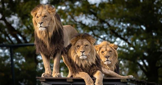 Cultura Pregunta Trivia: ¿A quién se le encomendó que matara al león de Nemea en la mitología griega?