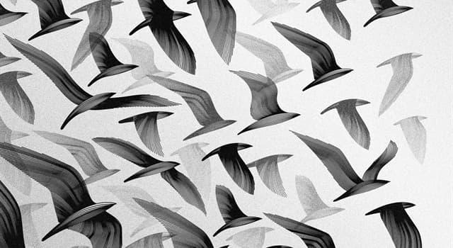 Naturaleza Pregunta Trivia: ¿Qué clase de animal es el colirrojo real?