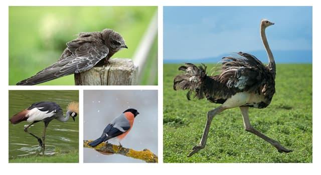 Naturaleza Pregunta Trivia: ¿Cuál de estas aves no puede volar?