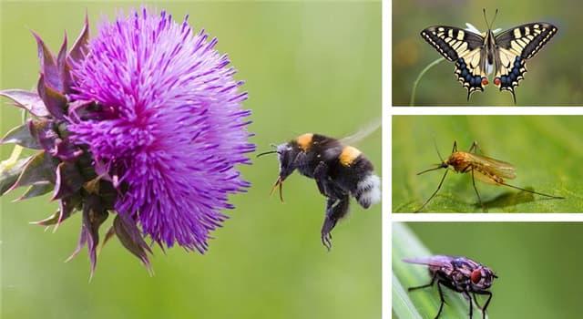 Naturaleza Pregunta Trivia: Según un mito popular, ¿qué insecto no debería ser capaz de volar según las leyes de la aerodinámica?