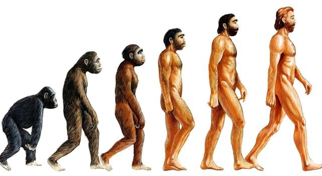 Сiencia Pregunta Trivia: ¿Cuál es el mecanismo decisivo según Darwin en la evolución de las especies?