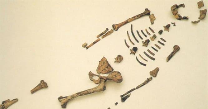 """Cultura Pregunta Trivia: ¿Por qué el paleontólogo Donald Johanson llamó """"Lucy"""" a los fragmentos óseos encontrados en Etiopía en 1974?"""