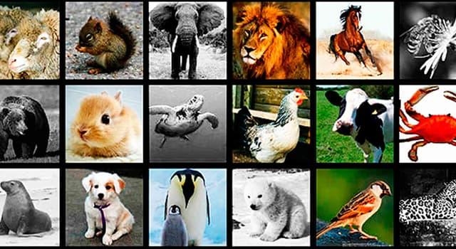 Сiencia Pregunta Trivia: ¿Qué animal de los enunciados es Artiodáctilo?