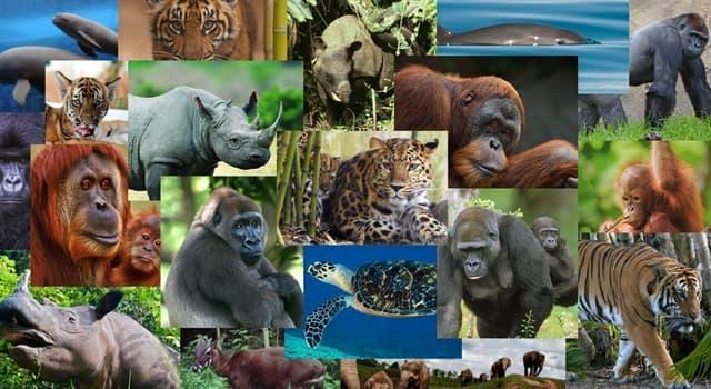 Naturaleza Pregunta Trivia: ¿Qué animal puede recorrer 300 km, pasar 4 días sin beber y más de una semana sin comer?