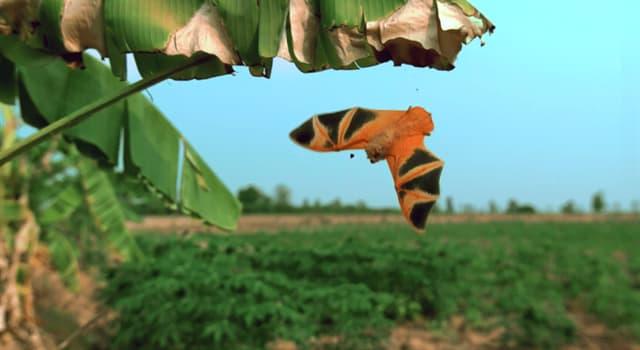 Naturaleza Pregunta Trivia: ¿Qué animal ves en la fotografía?